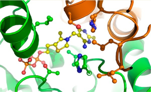 ThDP(yellow) in the active site of BFDC. The cofactor interactswith both the phosphate-binding domain of monomer A (green) and thepyrimidine-binding domain of monomer B (orange). Prepared using PyMOLusing data from PDB entry 1BFD.