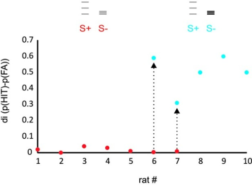 Rats learn to discriminate ICMS amplitude but not spatial frequency. The plot shows the discrimination index (di, the difference between relative frequency of HIT and FA) for a task presenting virtual grids that differed in spatial frequency and range of grid bar positions (red dots, task 1) and a task that in addition offered differences in ICMS amplitude (blue dots, task 2). Rats 1–5 were trained exclusively with the first stimulus set and never learned the task. Rats 6, 7, after showing similar results on the first task were switched to task 2 and learned the task within several sessions (arrows). Rats 8–10 were trained only to task 2 and readily learned it. The icons depict the position of the virtual grid bars, gray: small ICMS amplitude, black: large ICMS amplitude.