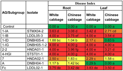 Pathogenic potential of Rhizoctonia isolates on seedlings of white cabbage and Chinese cabbage in in vitro bio-assays.Disease severity was assessed on a scale ranging from 0 (no symptoms) to 4 (lesions covering more than 75% of root, hypocotyl or leaf surface or dead plant). For rapid visual evaluation of the data, a coloring scale with green (0<DI≤1), yellow (1<DI≤2), orange (2<DI≤3) and red (3<DI≤4) was used. The experiment was done twice with 12 seedlings maintained in two square Petri plates for one treatment. The data of the two experiments were pooled before Mann-Whitney comparisons were applied at p = 0.05. Within columns, disease severities followed by the same letter are not significantly different.