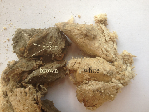 "Fragments of the subcutaneous fat of bison Rauchua.There are light and dark areas, which correspond to different stages of fat conservation. The clear area termed ""white"", corresponds to an intermediate state of formation of a structure called ""adipocere"", which corresponds to the result of saturation of unsaturated fatty acids. The dark ""brown"" area is the primeval fat, which contains hairs (H), and the unchanged fatty acids."