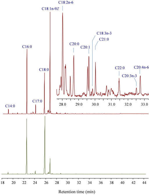 Gas-liquid chromatogram of fatty acid methyl esters from under skin fat from the belly of bison Rauchua.Red GLC from brown fat; green GLC from white lumps. As noted in the chromatogram, oleic acid (C18:1n-9Z) is the main FA component for brown fat, while palmitic acid (C16:0) and stearic acid (C18:0) are the main component for white fat.