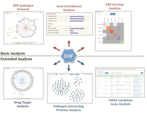 Six analysis tools of EHFPI to facilitate the in-depth understanding of EHF genes for pathogenic infection.