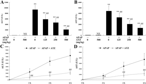 Pretreatment with ATZ suppressed the elevation of plasma aminotransferases induced by APAP.Mice were pretreated with vehicle or indicated doses of ATZ before APAP exposure. The plasma levels of alanine aminotransferase (ALT, A) and aspartate aminotransferase (AST, B) were determined at 8 h after APAP exposure. Data were expressed as mean ± SD, n = 8. * P<0.05, ** P<0.01, as compared with APAP group (APAP +/ATZ 0). In another set of animals, the mice were treated with either vehicle or ATZ (500 mg/kg) before APAP exposure. The mice were sacrificed at 2 h, 4 h or 6 h after APAP exposure and the plasma levels of ALT (C) and AST (D) were determined. The data were expressed as the mean ± SD, n = 8. NSP>0.05, ** P<0.01, as compared with the CON group; #P<0.05, ##P<0.01, as compared with the APAP group.