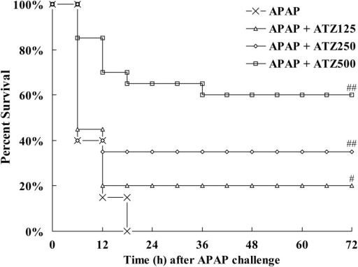Pretreatment with ATZ decreased the mortality induced by APAP.Mice were pretreated with vehicle or various doses of ATZ (125 mg/kg, 250 mg/kg, 500 mg/kg) before APAP exposure. Survival was monitored and the percent survival rate was expressed as Kaplan-Meier survival curves (n = 20). #P<0.05, ##P<0.01, as compared with the APAP group.