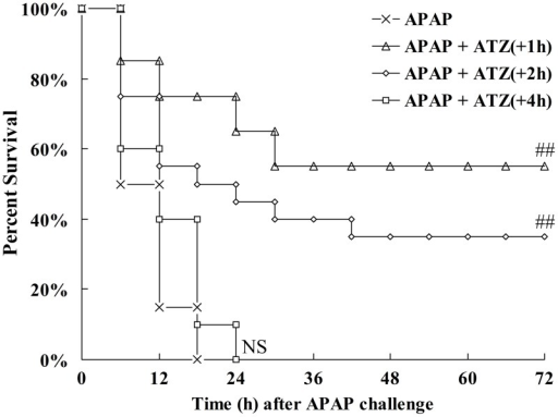 Posttreatment with ATZ decreased the mortality induced by APAP.Mice were treated with vehicle or ATZ (500 mg/kg) at 1 h, 2 h or 4 h after APAP exposure. Survival was monitored and the percent survival rate was expressed as Kaplan-Meier survival curves (n = 20). NSP>0.05, ##P<0.01, as compared with the APAP group.