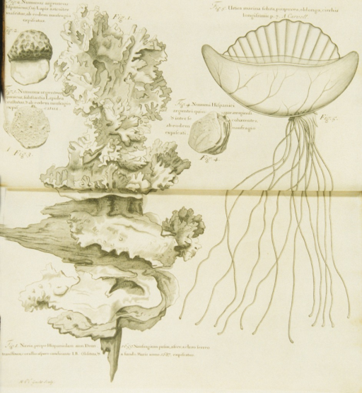 <p>Illustrations of various types of marine life and minerals.</p>
