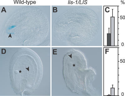Functional Analysis of Synergids and Central Cells in lis-1/LIS Plants(A–C) GUS staining in synergids after fertilization of wild-type and lis-1/LIS plants with pollen from the ET434G pollen-tube marker line. (A) Ovule with GUS-stained synergids. The arrowhead points at pollen tube. (B) Ovule in which no GUS staining was detected in synergids. (C) Frequencies of GUS negative synergids. Dark bars represent wild-type, light bars represent lis-1/LIS plants. The y-axis shows the percentage of the scored phenotype (lis-1/LIS: 50.8%, n = 789; wild-type: 21.5%, n = 287).(D–F) Endosperm development after fertilization of wild-type and lis-1/LIS plants with wild-type pollen. (D) Ovule with developing embryo (star) and endosperm (arrowhead). (E) Ovule with a developing embryo (star), but no endosperm. The undeveloped central cell nucleus is visible (arrowhead). (F) Frequencies of ovules with a developing embryo, but no endosperm. Dark bars represent wild-type, light bars represent lis-1/LIS plants. The y-axis shows the percentage of the scored phenotype (lis-1/LIS: 11.2%, n = 267; wild type: 0.5%, n = 191).