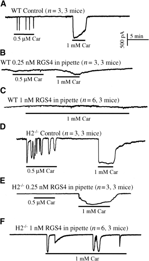 Effect of RGS4 on Ca2+ signaling in WT and Homer 2−/− cells. Cells from (A–C) WT or (D–F) Homer 2−/− mice were infused with (A and D) a control pipette solution, or pipette solutions containing (B and E) 0.25 nM or (C and F) 1 nM RGS4. About 7 min after brake-in to allow equilibration of RGS4 between pipette solution and cytosol, the cells were stimulated with 0.5 μM or 1 mM carbachol, as indicated by the bars. The number of experiments performed with similar results is indicated in parenthesis next to each trace.