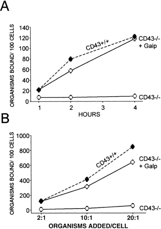 Addition of Galgp restores binding of M. avium by CD43−/− Mφ. (A) M. avium were incubated for varying times with CD43−/− Mφ in the absence (○) and presence (⋄) of 100 μg/ml Galgp. Bacteria/cell ratio was 2:1. The Mφ were harvested and extensively washed, and adherent bacteria were quantified. The binding of M. avium to CD43+/+ Mφ in the absence of Galgp is shown for comparison (•, dashed lines). (B) M. avium at varying bacteria/cell ratios as indicated were incubated with CD43−/− Mφ for 4 h in the absence (○) and presence (⋄) of 100 μg/ml Galgp. Shown are mean values ± SEM for three mice of each group. The number of mycobacteria associated with CD43−/− Mφ in the presence and absence of 100 μg/ml Galgp was significantly different in all conditions (P < 0.0001). Comparable effects of Galgp addition were observed in two additional experiments. Galgp at 200 μg/ml produced similar results (data not shown).