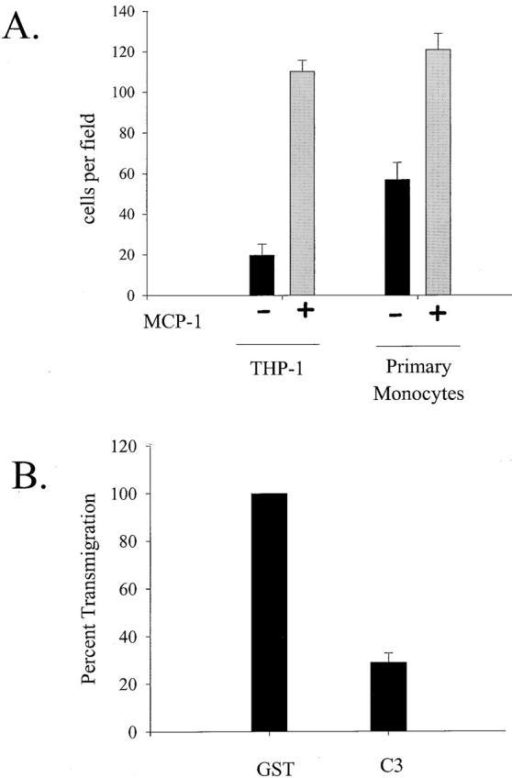(A) Transendothelial migration of monocytes is enhanced by MCP-1. The number of monocytes that transmigrated through an IL-1 activated, and endothelial monolayer increased more than fivefold for THP-1 cells and twofold for primary monocytes when MCP-1 was present in the lower chamber of a transwell chamber. The average number of transmigrated cells per field is plotted as the average from three separate experiments. (B) RhoA is required for transendothelial migration of monocytes. Transendothelial migration of primary monocytes electroporated with C3 is plotted as a percent of transmigration activity achieved by monocytes loaded with GST (control).