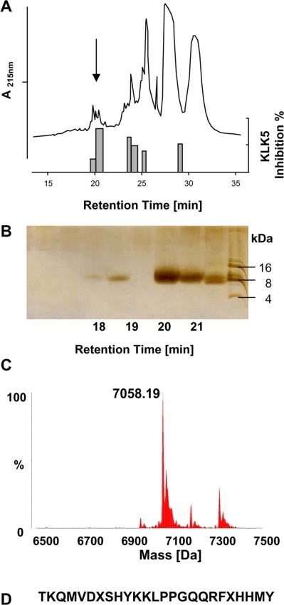 Identification of a new KLK5-inhibiting peptide in human stratum corneum.(A) RP-HPLC separation of extract stratum corneum extracts from human plantar callus. Top, components eluting between 0% and 100% acetonitrile. Bottom, KLK5-inhibiting-activity of the fractions. One out of three similar experiments is shown. Arrow indicates fractions with high activity to absorbance ratio at 20–21 min eluting time. (B) SDS page analyses of fractions eluting between 18 and 22 minutes. Since the fractions were not collected by time but by peaks, distance of fractions is not linear. A dominant peak of around 7 kDa is visible at 20–21 min eluting time. (C) ESI-MS analyses revealed a mass of 7058.18 kDa for the KLK5-inhibiting fraction. (D) Edman degradation resulted in the indicated N-terminal sequence.