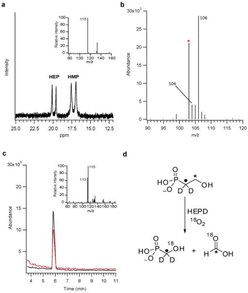 NMR and mass spectral data from in vitro labelling studiesa,31P NMR spectrum showing production of 13C-HMP (δ 17.2 ppm) from 1-13C-HEP (δ 19.9 ppm) after 50% conversion. Inset: mass spectrum of HMP derived from a reaction utilizing 1,1-2H2-HEP. b, Mass spectrum of 18O,13C-formate (m/z 106) produced by HEPD from a reaction utilizing 18O2 and 2-13C-HEP. Spurious formate is denoted by an asterisk (m/z 103). c, Analysis of HMP produced from the HEPD reaction performed with 18O2. Extracted ion chromatograms demonstrate ∼60 % of the HMP contains 18O (black line) while 40 % contains 16O (red line). Inset: summed mass spectrum from the total ion chromatographic peak. d, Summary of labelling studies from the HEPD reaction.