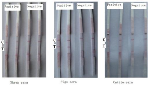 Test results of specific assay of the strip.