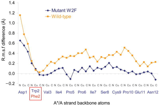 Modulation of the effect of Ca2+ on the A*/A strand mobility by the W2F mutation. The graph presents the difference between the R.m.s.f. observed in presence of Ca2+ and the R.m.s.f. observed in absence of Ca2+ for the E-cadherin wild-type (blue) and W2F mutant (orange) closed monomer sets of simulations.