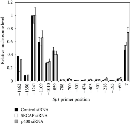 The density of nucleosomes at the Sp1 promoter is not altered in the absence of SRCAP or p400.  A549 cells were transfected with control, SRCAP or p400 siRNA and harvested 72 hours later.  DNA was isolated from mononucleosomes and amplified by qPCR using overlapping primer sets tiling the Sp1 promoter (see Table  S2) and presented relative to the amount of DNA amplified at position −1241. The graph represents the mean result and standard error of three or more independent ChIP experiments.