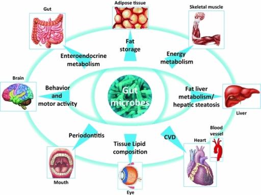 multiplesited impact of gut microbiota on whole host m