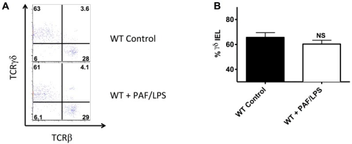 Intestinal injury in wild-type mice is not associated with a selective reduction in γδ IEL.A) Flow cytometry of small intestinal intraepithelial cells isolated from 2 weeks old dam fed wild-type (WT control, n = 2) or wild-type mice subjected to experimental gut injury as described (WT+PAF/LPS, n = 2). C57BL/6J mice stained for CD103, CD3, CD8α, TCRγδ and TCRβ as described above. Intraepithelial cells were pregated on CD103+, CD3+ to depict IEL and then further gated on TCRγδ and TCRβ as shown. B) Percent (mean ±SE) γδ IEL (defined as percent of total IEL that were TCRγδ+, TCRβ- IEL). Data are representative of 3 independent experiments (NS indicates no statistical difference between groups).