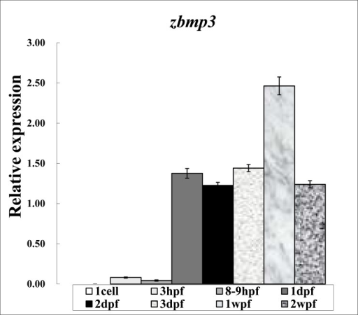 Expression study of zbmp3 by real-time PCR using samples from 1 cell, 3 hpf, 8-9 hpf, 1 dpf, 2 dpf, 3 dpf, 1 wpf, and 2 wpf time points.
