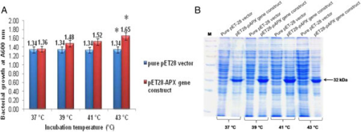 Heat stress study of recombinantE. coliBL21 (pET28a-TapAPX)cells. OD reading of E. coli BL21 (pET28) cells and E. coli BL21 (pET28-TapAPX) cells grown at different temperatures after IPTG induction (A). SDS-PAGE analysis of total protein (10 μg) of E. coli BL21 (pET28) cells and E. coli BL21 (pET28-TapAPX) cells subjected to heat stress, M-Marker (B). *indicates significant difference as determined by simple pair wise t-test comparison (α = 0.05).