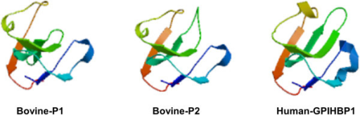 Predicted tertiary structures of bovine and human GPIHBP1. The reported human CD59 was used as the reference to obtain predicted GPIHBP1 tertiary structures by the SWISS MODEL method. The rainbow color code describes the tertiary structures from the N-termini (blue) to C-termini (red) for GPIHBP1 UPAR/Ly6 domains. Arrows indicate the directions for β-sheets.
