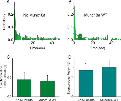 Effect of Munc18a on Ca2+-triggered fusion and spontaneous fusion with concurrent addition of Munc18a and SV vesicles to immobilized PM vesicles. Shown are histograms of Ca2+-triggered fusion events without Munc18a (A) and with 1 μm Munc18a (B) using PM vesicles containing full-length Stx1a. Munc18a and SV vesicles were introduced concurrently. All experiments were performed in the presence of 2 μm complexin. The histograms were calculated with a bin size of 1 s, normalized by the total of fusion events observed upon Ca2+ injection, and fitted to two-exponential decay functions (solid lines). The synchronization time constants (faster time constant of the fitted two-exponential fit) are shown in C. Spontaneous fusion events were observed for 1 min before Ca2+ injection and shown in D. Error bars in C, are 1σ errors computed from the covariance matrix during least square fitting using a Levenberg-Marquardt technique; error bars in D, S.E. value over 4–6 experiments.