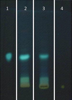 Chromatographic profile of hydroalcoholic (2) and methanol (3) extracts of Casearia sylvestris Sw. leaves by thin layer chromatography. Solvent system: acetone:chloroform:formic acid (10:75:8; v/v). Developer: NP/PEG; NP, diphenylboric acid 2-aminoethyl ester. PEG polyethylene glycol. Standards: 1 caffeic acid; 4 rutin.