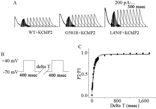 Effects of G581R and L450F on recovery from inactivation in KV4.3 with KChIP2. (A) Representative currents of recovery from inactivation recorded from G581R and L450F with KChIP2. (B) The stimulation protocol used for recovery from inactivation. (C) G581R and L450F do not promote the recovery of KV4.3/KChIP2 channel from inactivation compared with WT. The error bars represent standard error of the mean for ≥6 cells from each group.