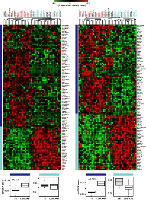 Gene sets associated with ATRA sensitivityUsing the microarray and RNA-seq data associated with the breast cancer cell lines, two ATRA score-associated gene lists ranked for their variable importance were generated. Upper Panels: The gene-expression results of the first 100-ranking genes in the RNA-seq (left) and microarray (right) datasets were used to perform a cluster analysis of the breast cancer cell lines according to the gene-expression profiles. Data are expressed using a log2 scale of the expression signal intensity after normalization of the data across the different cell lines. The genes marked in red are present in both the microarray and the RNA-seq gene sets. The cell lines marked in red are those belonging to the ATRA score T1 group and are sensitive to ATRA, while the ones marked in blue belong to the T3 group and are refractory to the retinoid. The left dark blue lines indicate the genes with higher levels of constitutive expression in the ATRA-sensitive cell lines, while the light blue lines indicate the genes with higher levels of basal expression in the ATRA-refractory cell lines. Lower Panels: The box plots show the enrichment score (single sample Gene Set Enrichment Analysis, ssGSEA) of the microarray (left) and RNA-seq (right) gene sets in the TN (patients 9, 22, 23, 31, 50) and Lum (patients 13, 18, 27, 36, 41, 44, 55, 60, 61, 62, 64) tumors cultured in the absence of ATRA for 48 h. The P-values of the enrichment are indicated.