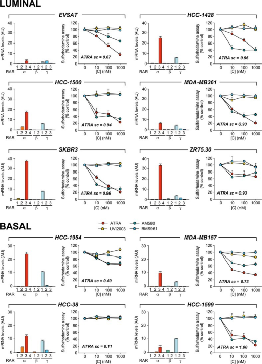 Effects of RAR agonists on the growth of Luminal and Basal breast cancer cell linesThe indicated Luminal and Basal cell lines were challenged with increasing concentrations of ATRA, the RARα agonist, AM580, the RARβ agonist, UVI2003, and the RARγ agonist, BMS961, for 6 days. The complement of RAR-variant transcripts expressed in each cell line is shown in the left bar graphs (mean ± SD of two replicate measurements). The growth curves (sulforhodamine assay) of the cell lines are illustrated by the right linear plots. The results are expressed in % values relative to the corresponding control dishes treated with vehicle alone (right graphs). Each result is the mean ± SD of five replicate wells. ATRA sc = ATRA score.