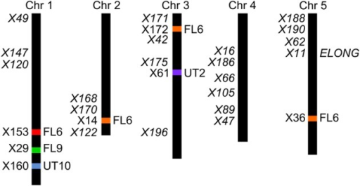 Position of the transgene(s) in the four populations. Four different positions were found for the active AOP3 FL6 (red, orange) by QTL mapping, however, co-segregation of the surrounding regions for the insert on chromosome 2, 3, and 5 (orange), suggests chromosomal rearrangements causing that what looks like three inserts are one found on any of three chromosomes. The AOP3 FL9 (green) and UT10 (blue) were found at chromosome 1, whereas the AOP3 UT2 (purple) is positioned on chromosome 3. The closest marker for each insertion site is indicated as well as all significant markers for a phenotype is depicted in italics.