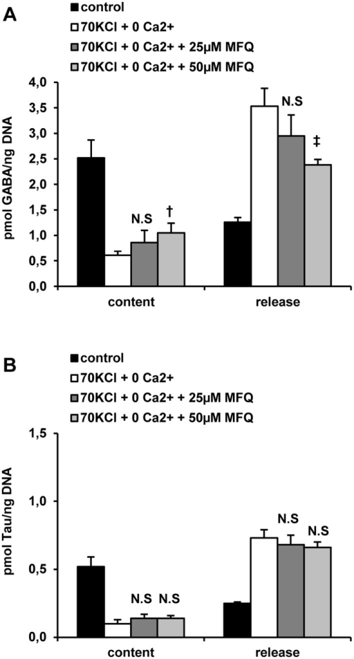 Effect of mefloquine (MFQ, a Cx36 inhibitor) on the islet content and release of GABA (A) and taurine (Tau) (B) induced by plasma membrane depolarization with 70 mM KCl (70 KCl) and extracellular Ca2+-omission.Ca2+-omission (0 mM CaCl2 + 100 μM EGTA = 0 Ca2+) and 70 mM KCl depolarization (70 KCl + 250 μM diazoxide = 70 KCl) were tested on content and release of GABA and Tau in incubated rat islets. Three groups each of 30 rat islets were pre-incubated with 10 mM Gln and 5 mM glucose for 1 hour. After washing three times with 100 μl PBS to withdraw extracellular Gln, islets were further incubated for 1 hour at 37°C (in 70 μl of KRBH) with 5 mM glucose alone (control) or under Ca2+-omission and KCl-depolarization (0 Ca2+ + 70 KCl) in the absence or presence of 25 and 50 μM mefloquine. At the end of incubation, an aliquot (50 μl) of incubation medium was taken off and the islets washed again three times with cold PBS (100 μl) to wash out remaining extracellular amino acids. Islets were finally extracted with 30 μl 10% (w/v) sulfosalycilic acid and stored frozen. Amino acids in the incubation media and islets extracts were separated by HPLC after derivatization with o-phtalaldialdehyde and quantified by fluorescence detection. (N.S., † p< 0.04, and ‡ p< 0.01 compared with the corresponding control in the absence of MFQ).