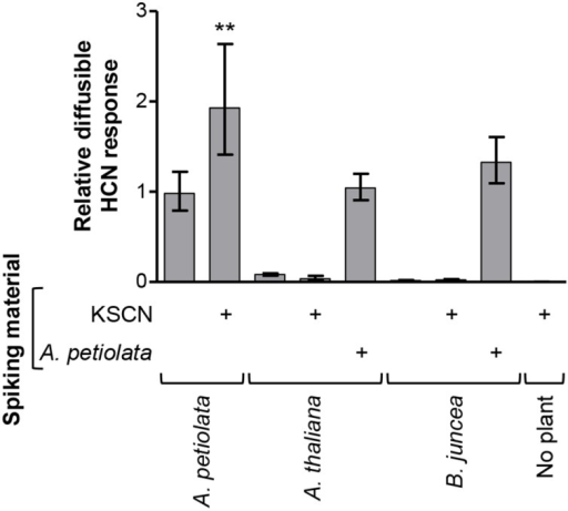 The glucosinolate-derived diffusible HCN response is not general to the Brassicaceae. A. thaliana and B. juncea were investigated for their ability to provide a diffusible HCN response from endogenous glucosinolates or from exogenously added KSCN. The response in the König reaction-based diffusion assay was quantified relative to the mean of unspiked A. petiolata samples and a one-tailed unpaired t-test was performed on the log10-transformed ratios. Bars represent back-transformed mean ± SD. (**P < 0.01; n = 4).