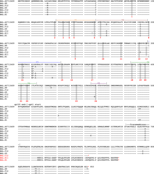 Complete gp160 amino acid alignment of HIV-1 BaL/SupT1-R5.BAL.AY713409 is the published reference sequence (GenBank accession number AY713409). Dashed lines show sequence identity to the reference sequence and amino acid polymorphisms are indicated by a single letter amino acid abbreviation. Key landmarks in gp160 are denoted above each region. Potential N-linked glycosylation sites are shaded. In two sequences (H11 and E1), a nucleotide frame shift lead to a premature stop codon (*). In a third sequence (C12) a nucleotide change in W754 also led to a premature stop codon (*).