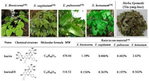 Natural sources and chemical structures of icariin and icariside II [18,19]. Herba Epimedii is made up of the dried leaves of E.brevicornu, E.sagittatum, E.pubescens or E.koreanum.