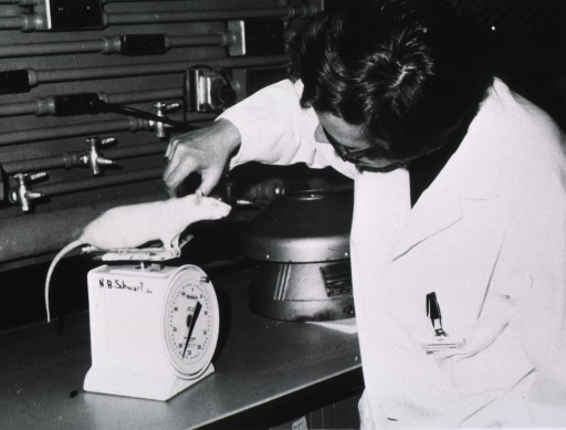 <p>Half length; head turned downward and to left (partially obscured); wearing glasses; wearing lab coat; weighing a rat used in studies of female processes; at Univ. of Ill. Med. Ctr.</p>