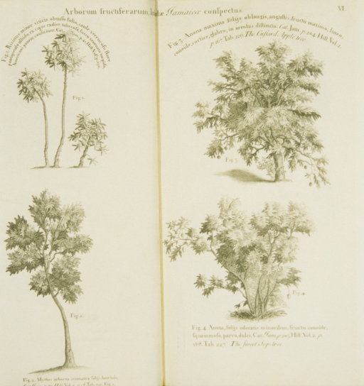 <p>Illustrations of four types of trees.</p>