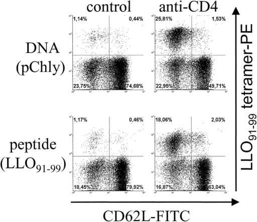 Response against peptide and DNA boost-immunization of L. monocytogenes–primed mice after CD4+ T cell depletion. Mice were infected with L. monocytogenes. After 100 d, mice were immunized either with the peptide LLO91–99 in incomplete Freund's adjuvant subcutaneously or with pChly DNA using the gene gun. Groups of mice were left untreated (control) or were injected with anti-CD4 mAb during the boost immunization. On day 7, spleen cells were stained and analyzed by flow cytometry. Dot plots depict CD62L and LLO91–99-tetramer staining of viable CD8α gated cells. The experiment shown is representative of two independent experiments with three individually analyzed mice per group.