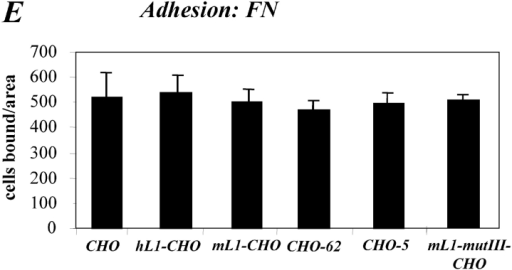 Expression of L1 enhances haptotactic migration of CHO cells. (A) FN at 10 mg/ml or BSA for control were coated on the backside of Transwell chambers. CHO, h/mL1-CHO or mL1-mutIII-CHO cells stably expressing L1 devoid of RGDs were seeded into the top chamber and allowed to transmigrate for 16 h at 37°C. Each determination was done in quadruplicate and transmigrated cells were stained from the back of the filter. The dye was eluted from the filter and measured at 595 nm. The amount of dye is proportional to the number of transmigrated cells. Values for the migration on BSA were below 0.25 OD units for each cell type. (B) Staining of CHO-transfected cells used in (A) with mAbs to human or mouse L1, respectively. (C) Analysis of CHO and mL1-CHO cell migration on vitronectin or laminin (each coated at 10 mg/ml). Analysis of migrated cells was done as described in A. (D) Dose–response curve for the migration of CHO and mL1-CHO cells. The assay was done as described in A. (E) FN or BSA for control were coated on LABTEK chamber slides, and the adhesion of CHO cells and transfectants was determined in the presence of 2 mM Ca 21 and 2 mM Mg21. Binding to BSA was below 50 cells/area. (F) Cells were grown on coverslips, stained with mAb 324 to mouse L1, and analyzed by fluorescence microscopy. (G) Cells were cultivated for 24 h and TCA-precipitated supernatants and cell lysates were analyzed. After SDS-PAGE, L1 was detected by Western blotting and ECL detection using anti L1 antibodies.