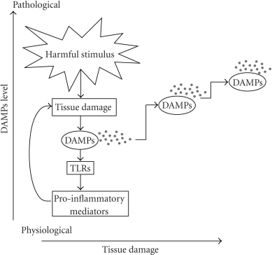 "The ""damage chain reaction.""  Harmful stimuli, including pathogens, injury, heat, autoantigens, tumor, and necrotic cells, cause tissue damage. Endogenous danger signals are generated and induce a pro-inflammatory cascade by activating TLRs. In turn, pro-inflammatory mediators are upregulated and trigger further tissue damage leading to increasing DAMPs levels. Thus a vicious cycle is sustained and may result in chronic inflammation and autoimmunity."