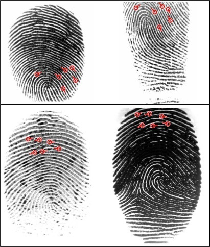 Two examples where all matching algorithms fail but our algorithm finds true matching minutiae. The first row contains fingerprints db1_36_1 and db1_36_4 of database DB1_A (FVC2002); the second row contains fingerprints 85_6 and 85_8 of database DB1_A (FVC2004).