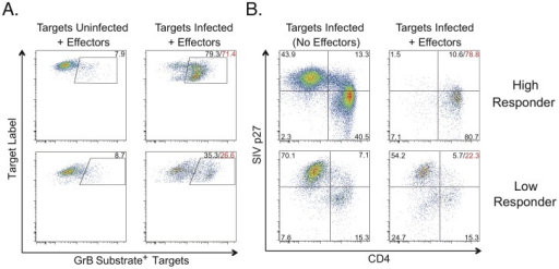 "SIV-specific CD8+ T cell cytotoxicity measured by granzyme B delivery or Infected CD4 Elimination (ICE).A. The top panels show granzyme B (GrB) target cell activity representative of a ""high responder"". The bottom panels show GrB target cell activity representative of a ""low responder"". Values indicate percentages of targets with increased fluorescence due to GrB substrate cleavage. Background GrB target cell activity measured in response to uninfected targets (left column) was subtracted from responses measured against infected targets (right column) to determine net GrB target cell activity (red values). B. ICE values calculated based on p27 expression (sum of the upper quadrants) as described in the Methods, are shown in red for the same ""high responder"" (78.8%, top row) and ""low responder"" (22.3%, bottom row) as shown in A. Quadrant values indicate percentages of gated targets. In all experiments, CD4+ T cell lines were used as targets. CD8+ T cells that had been stimulated with SIV-infected targets for 6 days were used as effectors. GrB target cell activity and ICE were calculated after 1 hour of incubation of effectors and plated at an E∶T ratio of 25∶1."