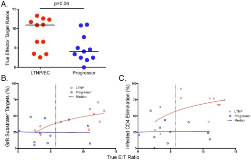 SIV-specific CD8+ T cells of LTNP/EC mediate greater per-cell killing of SIV-infected targets than those of progressors, which is not simply due to higher true E∶T ratios.A. The true effector to target (E∶T) ratios, determined by measurements of IFN-γ-secreting CD8+ T-cell effectors and p27-expressing CD4+ T-cell targets, respectively, as described in the Methods and shown in the Figure S1 and Table S1, were compared between LTNP/EC (n = 11) and progressors (n = 11). Horizontal bars represent the median values. B, C. GrB target cell activity (B) or ICE (C) responses plotted against the true E∶T ratios are shown for LTNP/EC (n = 10, GrB target cell activity; n = 11, ICE) and progressors (n = 11). GrB target cell activity is shown after subtraction of background. The response curves were analyzed by regressing ICE and GrB on log true E∶T ratios using analysis of covariance. The standard two-tailed t test from regression analysis was used to compare estimated GrB target cell activity and ICE of LTNP/EC with that of progressors at the 5.8 E∶T ratio, the median of the combined E∶T ranges of both groups.