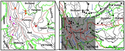 Distributions of Percocypris and molecular samples.Red lines indicate major river basins; blue arrows denote general direction of water flow; green lines indicate boundaries. (Right map) Extant distributions of Percocypris based on literature records and localities of specimens: dots – Upper Yangtze River, five-pointed star – Fuxian Lake, diamonds – Upper Pearl River, triangles – Mekong River, squares – Salween River, cross – Red River; (Left map) Geographic distribution of molecular samples of Percocypris used in this study: orange dots – Upper Yangtze River, red five-pointed star – Fuxian Lake, purple diamond – Upper Pearl River, pink triangles – Mekong River, green square – Salween River.