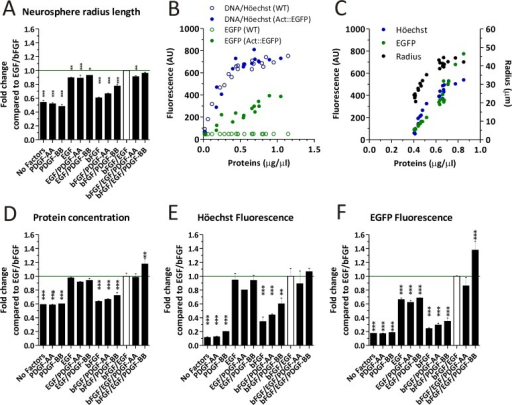 Analying the cell yield by measuring different parameters in Actin::EGFP (A-F) and WT (B) mice NS cultures.A) The NS radius length was measured under the different experimental conditions. B) Comparison of EGFP and Höechst fluorescence as a function of total proteins in NS cultures derived from WT and Actin::EGFP mice. C) The radius length, DNA content and EGFP fluorescence are expressed as a function of the protein concentration. D-F) Whole NS extracts were analyzed according to the total cell protein concentration (D), DNA content (E) and EGFP fluorescence (F) for different experimental conditions. Data in A, D-F were analyzed with a One-way ANOVA and Dunnet´s post-test, where the EGF/bFGF treatment was established as the control and error bars represent the SD. * = p < 0.05, ** = p < 0.01, *** = p < 0.001.