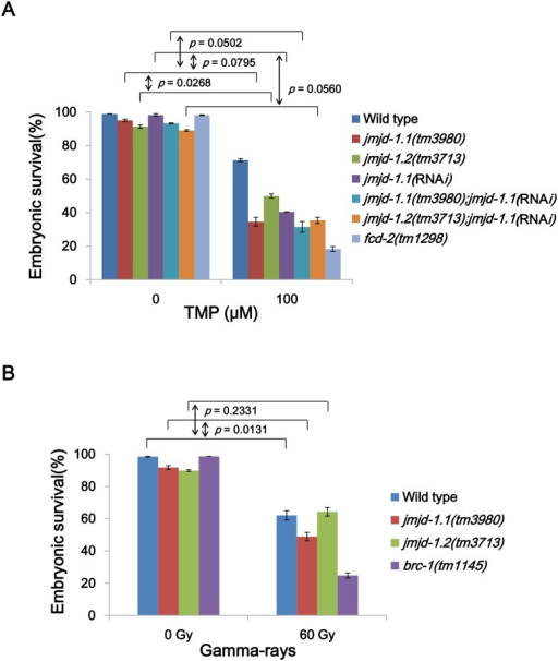 jmjd-1.1 mutant worms are hypersensitive to ICLs and DSBs.(A) L4 stage worms were collected and incubated with trimethyl psoralen (TMP, 100 μM) for 40 min and exposed to UVA light (150 J/m2). (B) L4 stage worms were exposed to γ-rays at 60 Gy. In every experiment, eggs were collected between 24 and 40 h post treatment, and their survival was scored 24 h later. Mutations for fcd-2 and brc-1 (C. elegans FANCD2 and BRCA1 homologs, respectively) were used as positive controls for the corresponding type of DNA damage. Error bars indicate SEM. p values were obtained by calculating the difference (Δ) in embryonic survival between 0 and 100 TMP for each strain, and comparing the Δ values in the strains by two-way ANOVA.