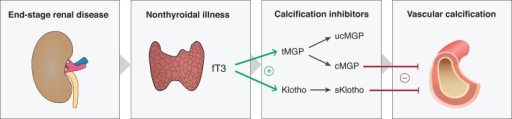 A hypothesis on the impact of non-thyroidal illness on vascular calcification.