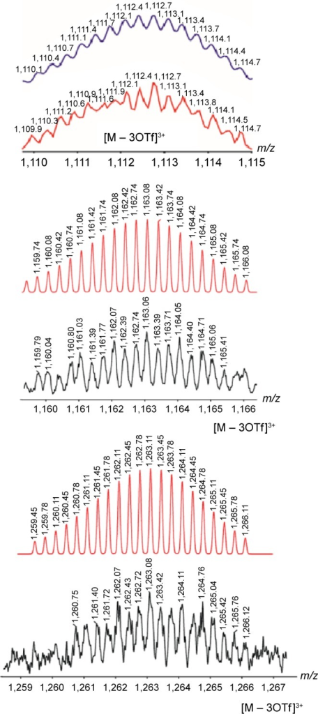 Calculated (red) and experimental (black) ESI-MS spectra of ellagic acid encapsulated prisms 9–11.Abbreviation: ESI-MS, electrospray ionisation mass spectrometry.