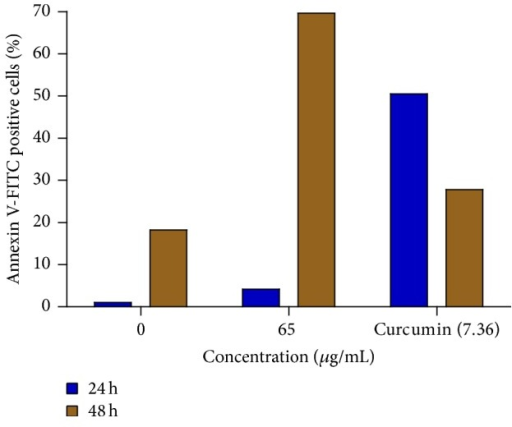 Percentage of apoptotic MCF-7 cells after treatment with 65 μg/mL of the extract for 24 and 48 h. The 0 μg/mL represents untreated cells, while curcumin (7.36 μg/mL) represents the positive control.