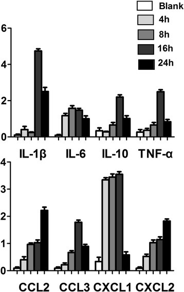 Real-time RT-PCR results. After fungal stimulations, all 7 inflammatory factors, except IL-10, increased with different degrees, during which, IL-1β, TNF-α, CCL3 peaked at 16 h and decreased at 24 h, CXCL1 peaked at 4 h, IL-6 peaked at 8 h, CCL2 and CXCL2 continued rising. IL-10 decreased at 4 h, increased from 8 h, peaked at 16 h, and reduced from 24 h