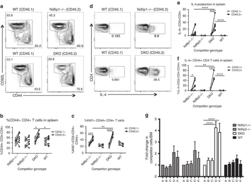 Ndfip deficiency causes intrinsic CD4+ effector T-cell expansion.(a–g) Mixed foetal liver chimeras using CD45.2 WT, Ndfip1−/−, Ndfip2−/− or Ndfip1/Ndfip2 DKO foetal liver were analysed 6 weeks following reconstitution. (a) Representative CD44 and CD62L staining of splenic CD4+ T cells from Ndfip1−/− mixed chimera (top) and DKO mixed chimera (bottom), previously gated on live, singlet CD3+CD4+CD45.1 or CD45.2+ cells. (b,c) Flow cytometry analysis of CD45.1+ and CD45.2+ splenic T cells from chimeras showing (b) percentages of CD44+ cells and (c) percentages of CD44+ that are Ki67+. (d–f) Ex vivo stimulated splenocytes were stained for IL-4. (d) Representative flow plots of IL-4+ CD4+ T cells, (e) combined data from d, (f) percentages of CD44+ CD4 T cells that are IL-4+. (g) Percentages of CD45.2 cells among various T-cell subsets, normalized for reconstitution, as determined by the ratio for CD45.2:CD45.1 IgM+B220+ B cells in the bone marrow. Compartments analysed are as follows: A=IgM+B cells in bone marrow, B=double positive thymocytes, C=single positive CD4+ thymocytes, D=CD44+ CD4+ T cells in spleen, E=CD44+ CD4+ T cells in lung. Data shown in b and e were pooled from two experiments, 7–8 chimeras per group; (c,f,g) have 4–5 chimeras per group. Quantifications are average ±s.e.m. P values calculated by two-way ANOVA (b,c,e,f) or repeated measures one-way ANOVA (g), with Holm–Sidak test for multiple comparisons: *P<0.05, **P<0.01, ***P<0.001, ****P<0.0001.